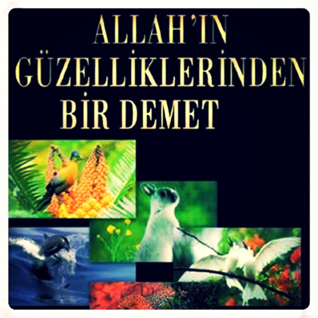Allah'ın Güzellikleri