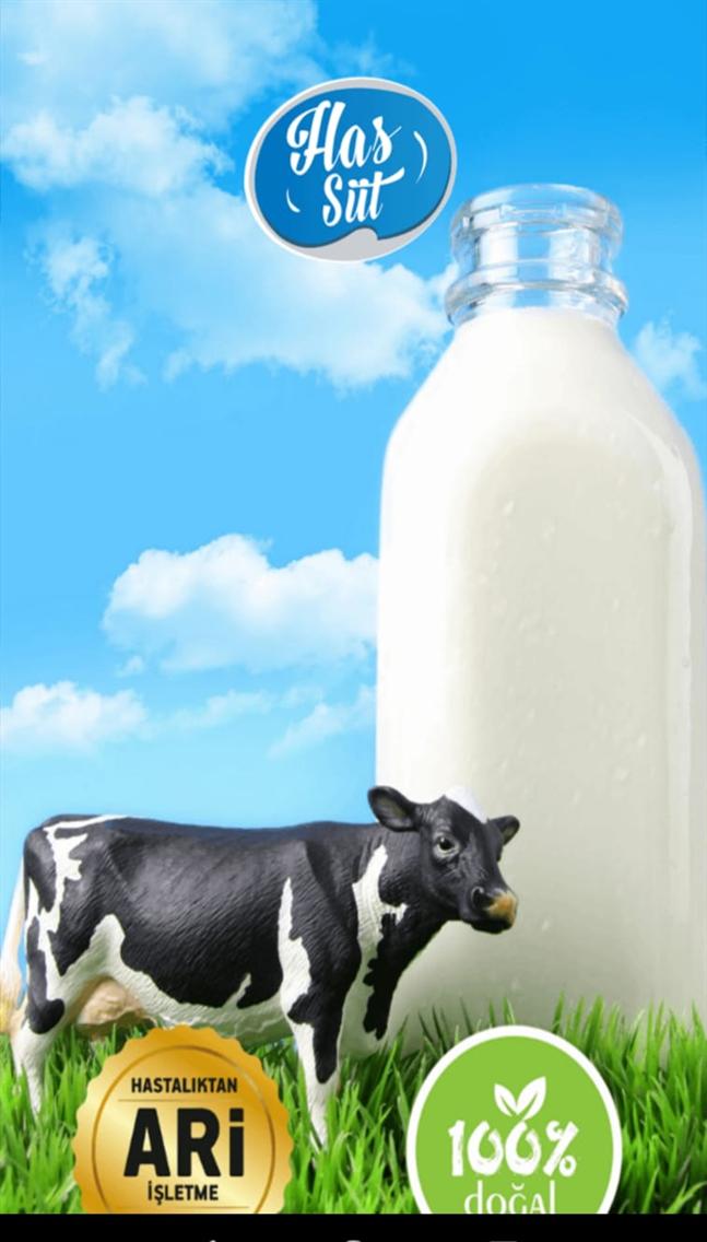 Has Süt