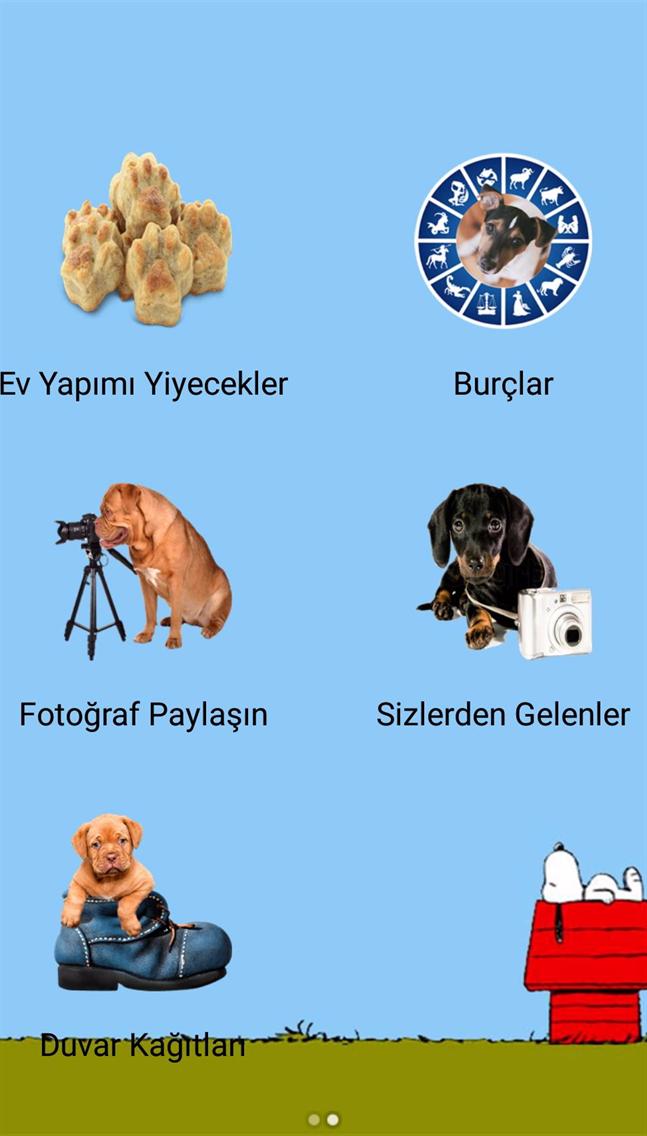 Köpekler Hakkında Herşey