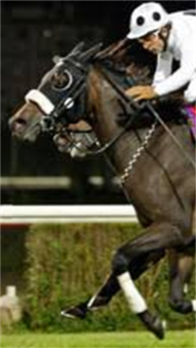 At Yarışı Tahmin