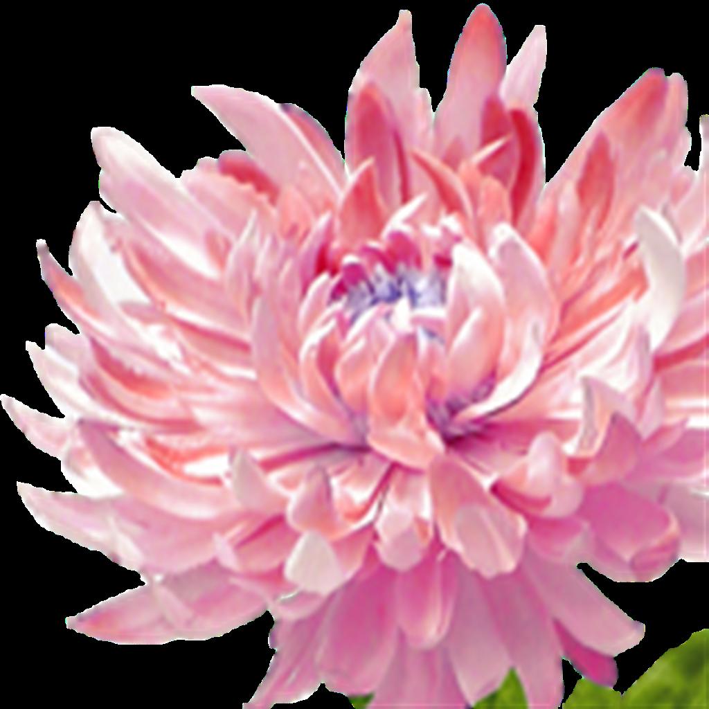 Flower Fest 2020