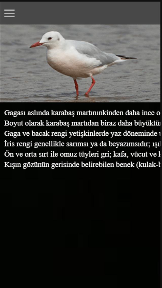 GullApp