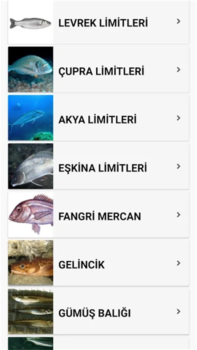 Balık Avı Zamanı